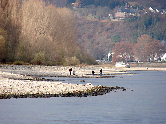 Das Rheinufer beim Wassersportverein Sinzig