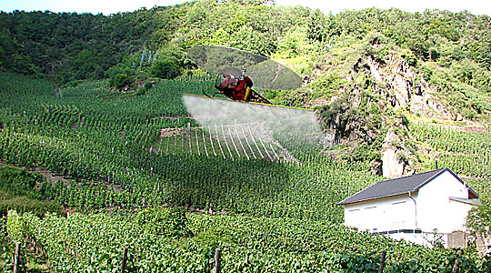 Hubschrauber bespritzen die Weinberge