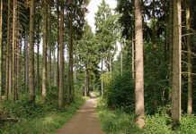 Waldarbeiten im Sinziger Stadtwald - Borkenkäferbefall