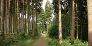 Holzplanagen auf dem Mühlenberg