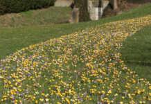 Frühling in Sinzig - Erfolg der Pflanzaktion des Bürgerforums