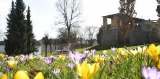Sinzig blüht weiter auf - 42000 Blumenzwiebeln gepflanzt