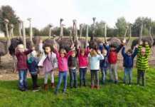 Straußenfarm in Remagen faszinierte Maxiclub der Kindertagesstätte St. Hildegard