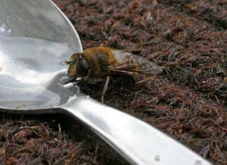 Die Bienen sind Schwebfliegen - der Film