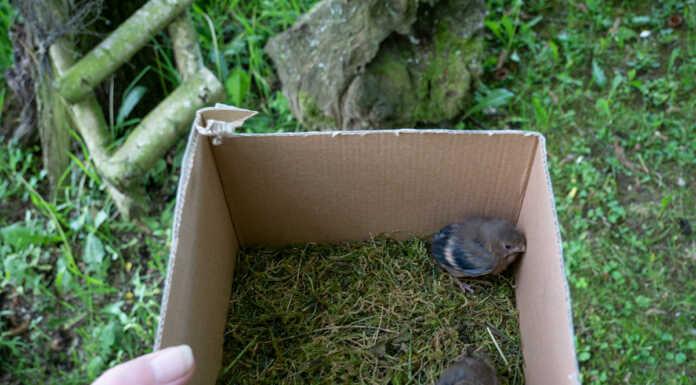Jungvögel retten