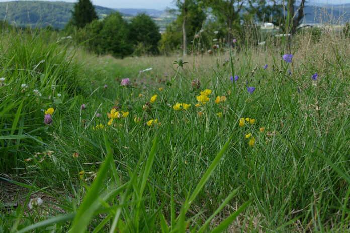 Kreis Ahrweiler engagiert sich für Insekten
