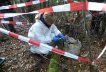 Afrikanische Schweinepest: Der Kreis Ahrweiler probt den Ernstfall