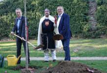 750 Jahre Stadtrechte: Ein Amberbaum für Sinzig