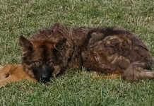 Verwahrloste Hunde im Tierheim Remagen untergekommen