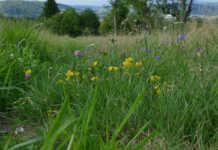 Projekt Artenreiche Wiese: Infoveranstaltung zur Förderung für Vereine und Ortsgemeinden