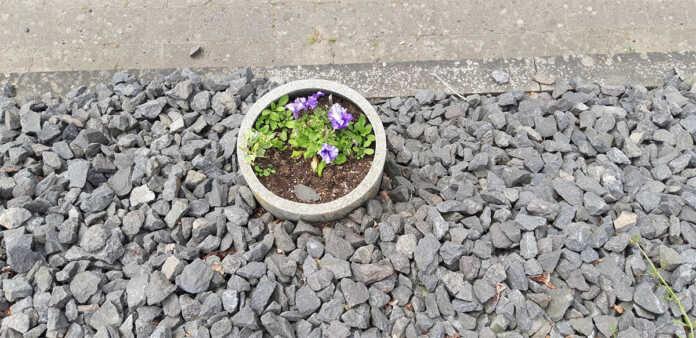 Artenreiche Wiese: Kreis fördert die Umgestaltung versiegelter Flächen