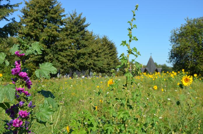 Stadt Remagen bittet Spaziergänger, keine Blumen zu pflücken
