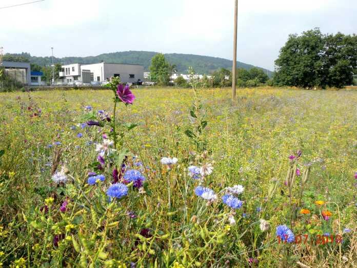 Blühwiesen in Sinzig