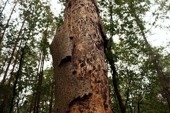 Die Grüne Stadtratsfraktion fragt sich, ob der Remagener Wald auf einem guten Weg ist?