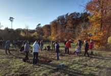 30 neue Bäume für den Sinziger Generationenwald