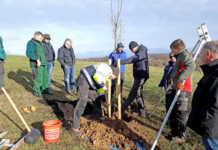 """Artenreiche Wiese: Jetzt zum Workshop """"Streuobstbäume pflegen"""" anmelden"""