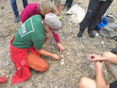 Sabine Peters sortiert die gesammelten Kieselsteine