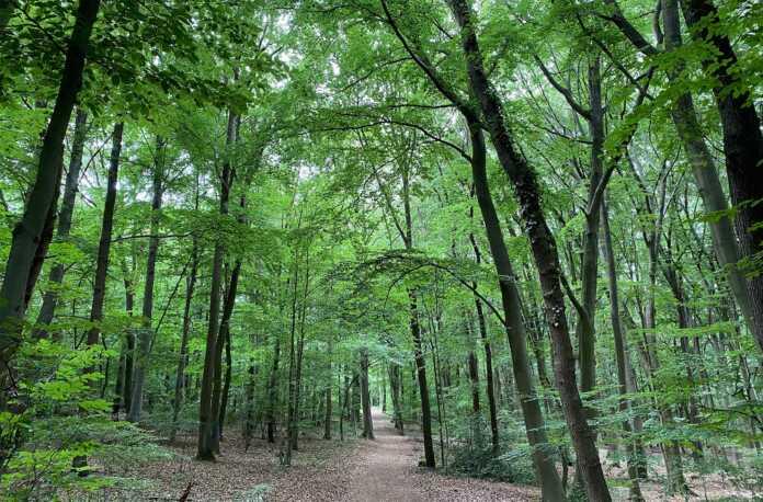 Standpunkt der CDU zum Stadtwald in Sinzig