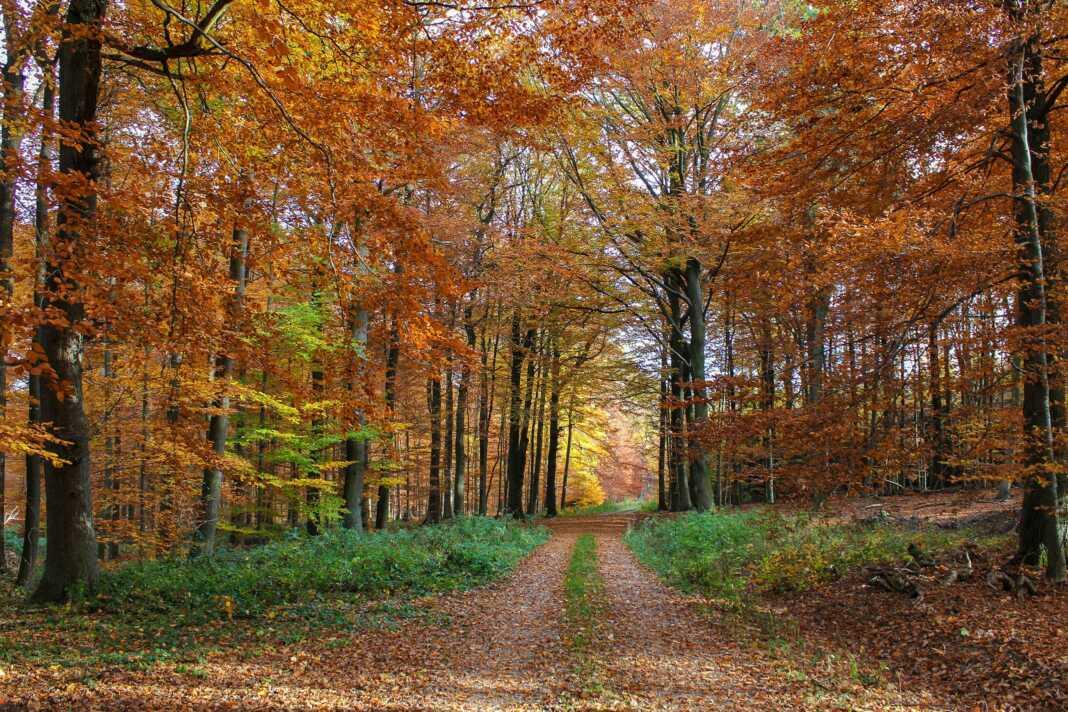 Stellungnahme der Grünen zu Pressemeldungen Stadtratssitzung Sinziger Stadtwald