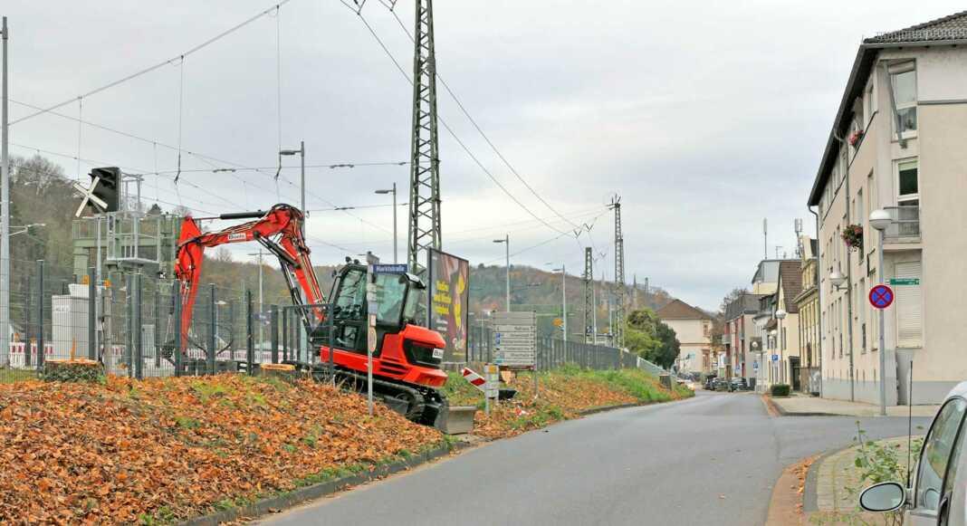 Baumfrevel: Wieder Baumfällungen in Remagen zu betrauern - Die GRÜNEN werden an diesem Thema weiter dranbleiben