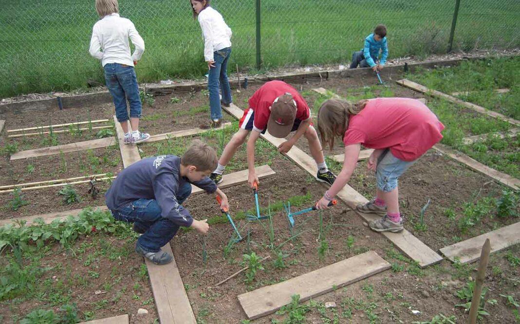Schülerinnen und Schüler im Schulgarten
