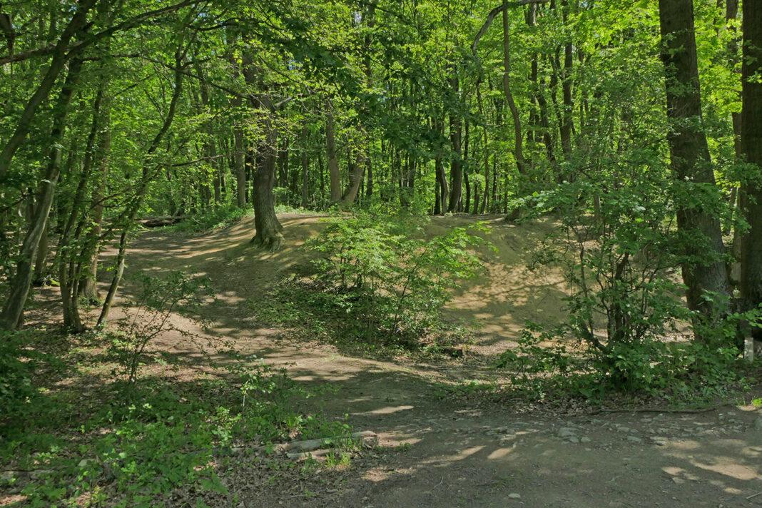 Trail auf dem Ziemert an drei Eichen